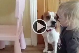 Fofo: garotinha consola cachorro que quebrou tigela