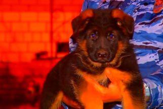 França ganha cachorro após morte de cão polícia em ataques terroristas