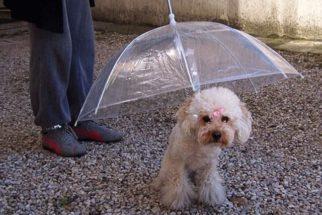 20 objetos engraçados para cachorros