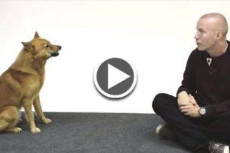 Hilário: reação de cães ao ver uma pessoa imitando um latido