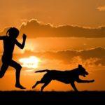 Instinto protetor: cães salvam crianças perdidas