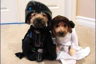 10 cães que são fãs de Star Wars