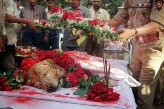 Para onde vão os cães quando morrem?