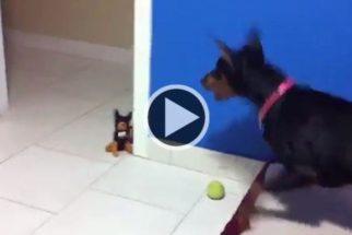 Para rir: cadela se assusta com cachorro de brinquedo
