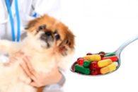 Truques para dar medicamentos para seu cão