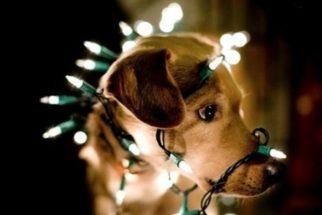Truques para evitar que seu cão se machuque com os enfeites natalinos