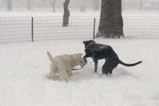 10 cães que adoram brincar na neve