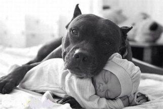 As raças de cães que são extremamente carinhosas