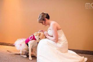 Cadela de terapia ajuda dona a ir até altar em casamento