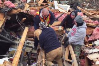 Após tornado, cães são resgatados e reencontram dono