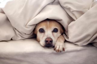 Aprenda a acalmar seu cachorro em dias de festas