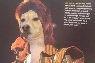 Artista faz sucesso com montagens engraçadas de seus cães