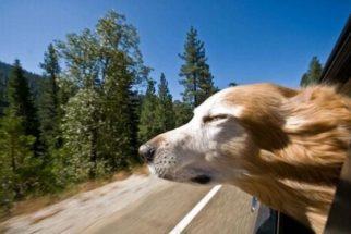 As orientações de segurança para quem vai viajar com o animal de estimação