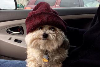 12 cães que se chamam Bob