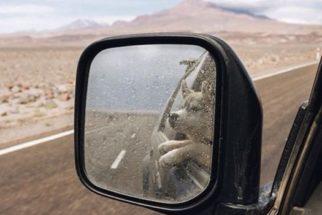 Férias: os cãezinhos que 'caíram' na estrada junto a seus donos