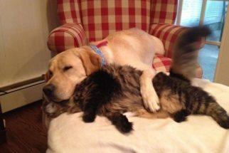 Os 10 abraços mais fofos do universo canino