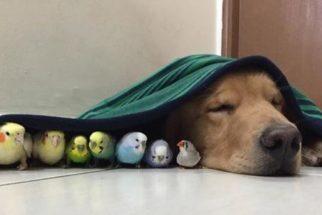 Cachorro faz sucesso na web por ter amizades bem inusitadas