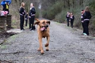 Cadela 'corre' meia-maratona, fica em sétimo lugar e recebe medalha