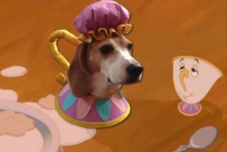 Cadelinha faz sucesso com fantasias de personagens da Disney