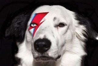 Cães homenageiam cantor David Bowie no Instagram