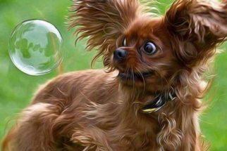 Os cães que têm medo de coisas bobas