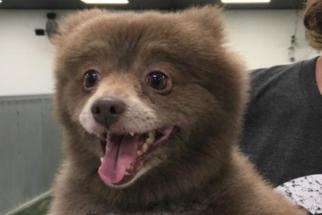 Cão ou urso? Foto postada na web causa dúvida entre internautas