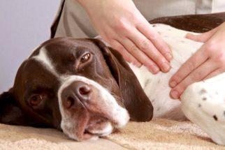 Como fazer massagem nos animais?