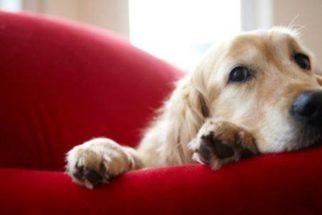 Como identificar o que um cachorro pensa?
