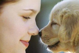 Conheça 5 coisas nos humanos que os cães conseguem perceber