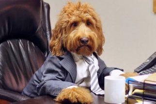 Conheça Oliver, o cãozinho 'modelo' do Instagram