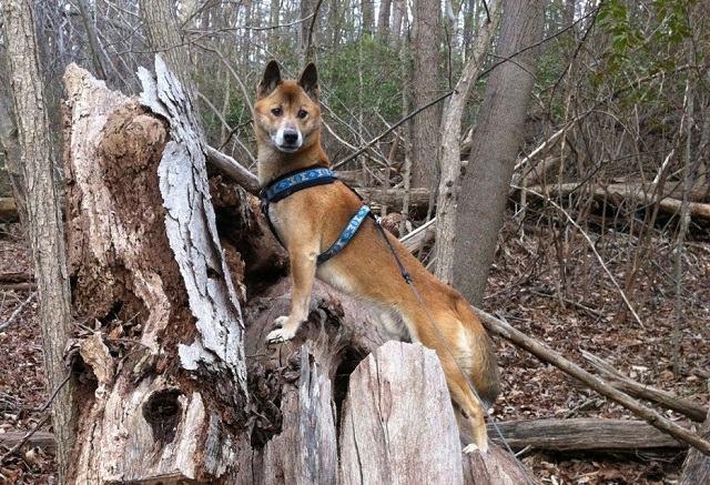 descubra-quais-sao-as-12-racas-de-cachorros-mais-exoticas-e-raras-4
