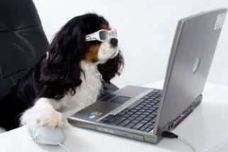 Entenda por que seu cão não te reconhece pela webcam