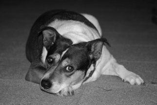 Falta de cálcio: causa e como tratar isso nos animais