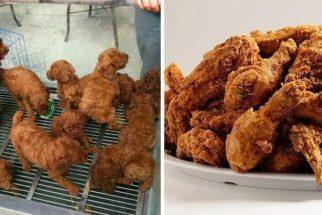 11 cães que se parecem com outras coisas