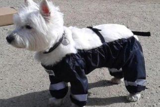 Fotos: cães entram na moda de usar calças