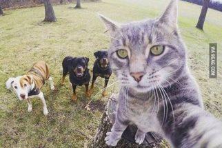 Gato 'tira' selfie com cães e faz sucesso na internet