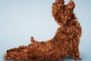 Inspire-se com cães praticando yoga