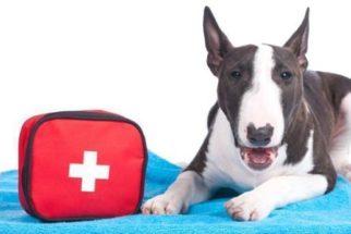 Monte uma maleta de primeiros socorros para cães