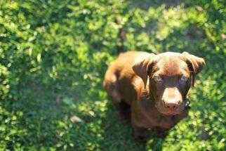 Medicamento promete aumentar a expectativa de vida dos cães