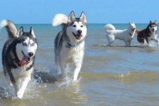 Os cães australianos mais adoráveis do Instagram