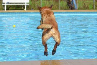 Os melhores esportes para cachorros