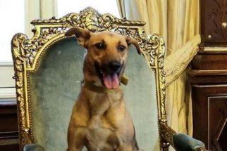 Presidente argentino posta foto do seu cão em cadeira presidencial