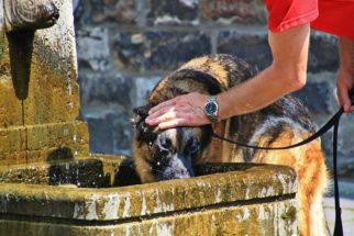 Verão: saiba como estimular o cão a beber mais água