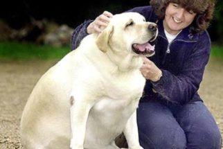 Você sabia? Cães com tutores obesos geralmente também são 'gordinhos'