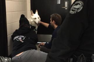 Após fugir, cão vai parar em redação de jornal de universidade