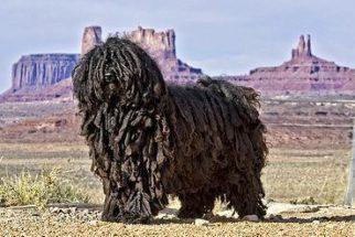 6 raças de cães que são, no mínimo, exóticas