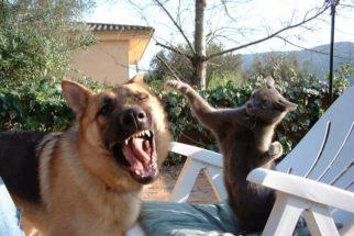 A origem da rivalidade entre cães e gatos