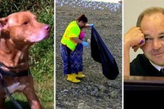 Após abandonar cão, tutora recebe pena para trabalhar em aterro de lixo