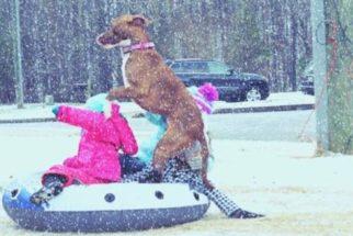 10 cães que sempre perdem a cabeça ao ver neve