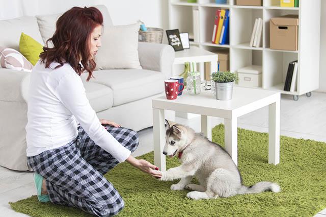 A decoração precisa atender as necessidade do pet e também sua segurança e higiene